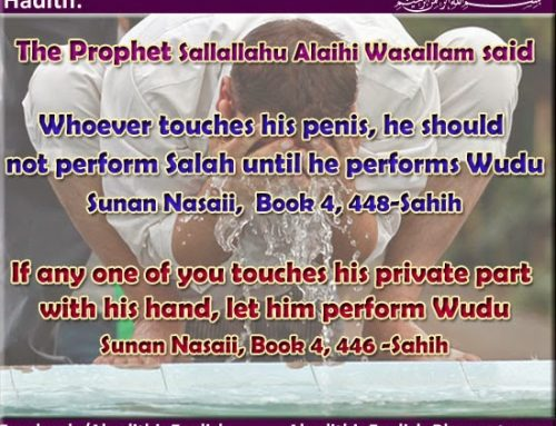Whoever touches his penis, he should not perform Salah until he performs Wudu